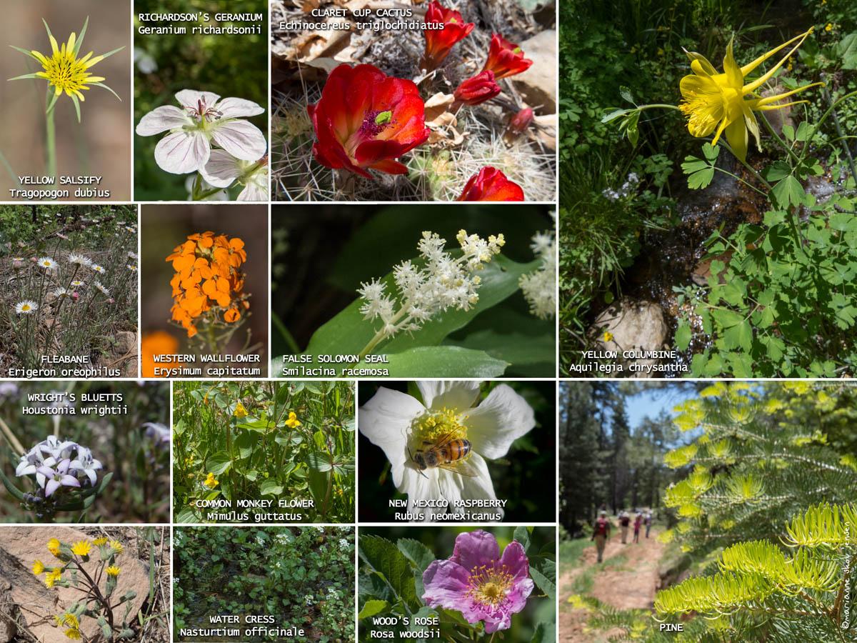 mjensen_Payson_Devin_collage.