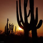 Saguaro Silhouette at Sunrise