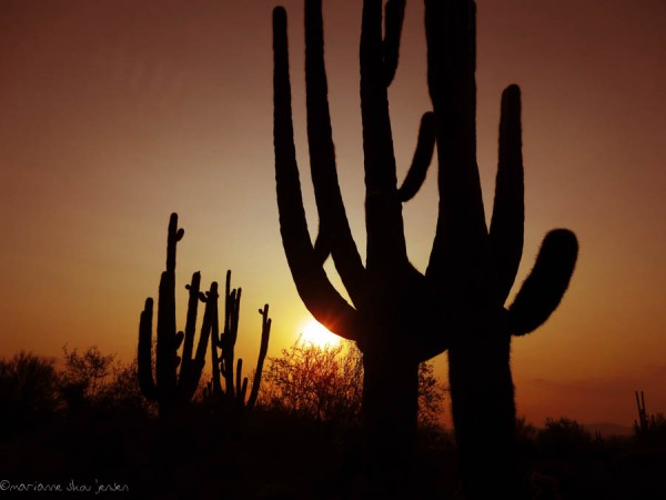 Saguaro Silhouette at Sunrise
