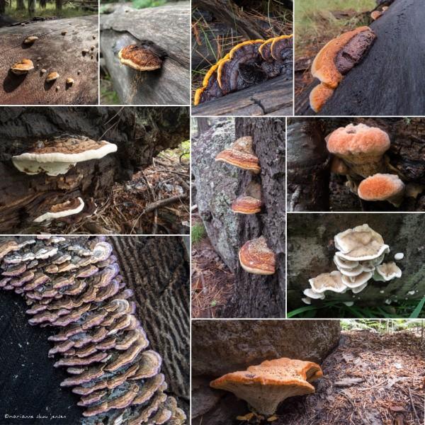 brackets-collage
