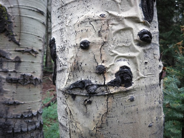Crooked smiling Aspen