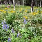 mjensen-flagstaff-wildflowers-8340