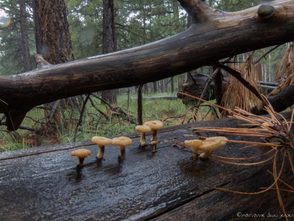 Shooting Mushrooms in the Rain