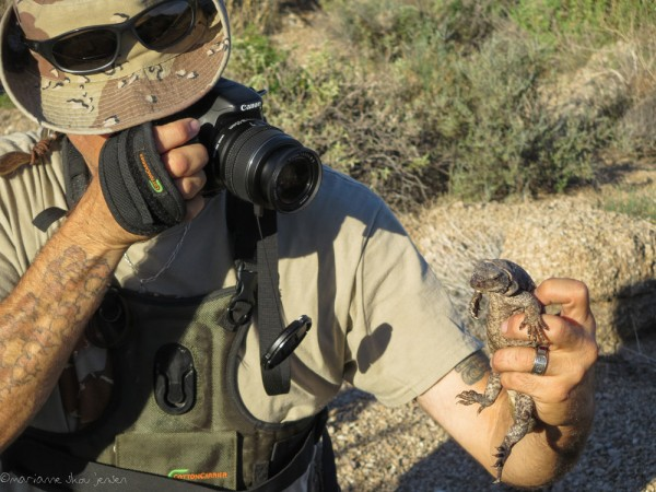 Herp expert, Dave Weber, takes photos for documentation. He also takes the Chuckwalla's temperature and notes several things about the area. (Canon SX50)