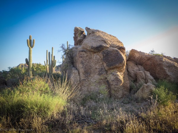 Rock creature spotted on the way to Balance Rock. Saguaro Cactus give you an idea of how large he is!