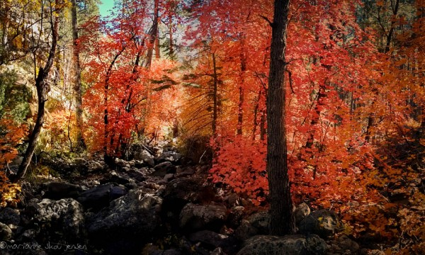 Maples are on both sides of Highway 89a and require just a little bit of hiking. (smartphone)