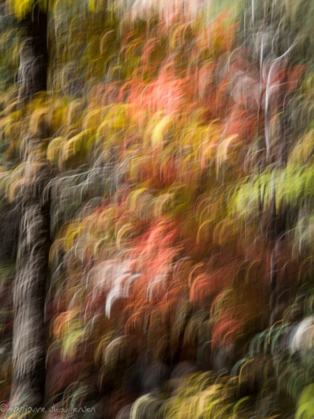 More Maples in Motion. Sorry...can't help myself. (Fuji X E-1)