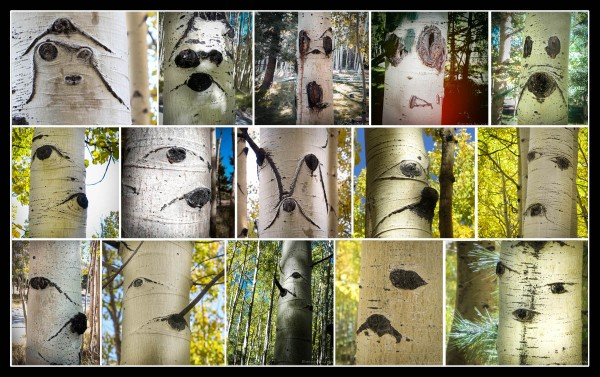 I often miss the BIG pictures in Nature because I'm so distracted by faces :-)