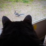 Cleo feels sure he could easily catch this squirrel if I would just give him the chance!
