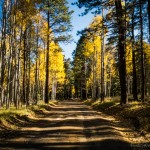 mjensen-Hart-Pairie-Road-