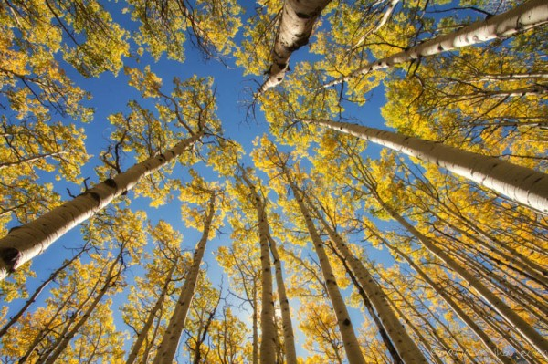 Couldn't resist shooting one last Aspens in the Sky shot!