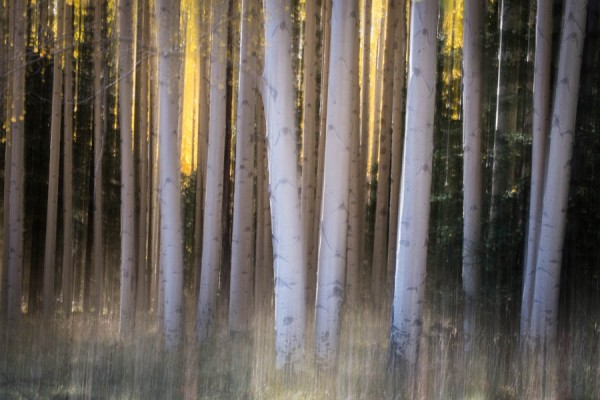 A little intentional camera movement to make the Aspens look SPOOKY just in time for Halloween :-) (Fuji X-E1