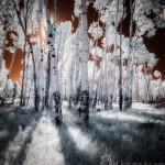 mjensen-infrared-aspens-hart-prairie