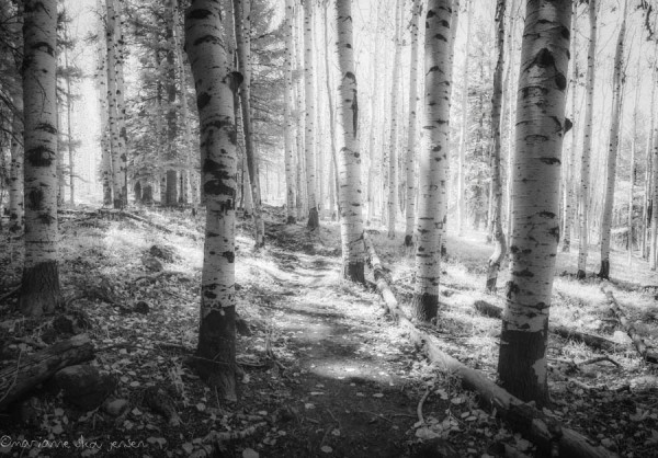 Along the Inner Basin Trail which is accessed from Lockett Meadow. Here I converted to BW with just a touch of color.