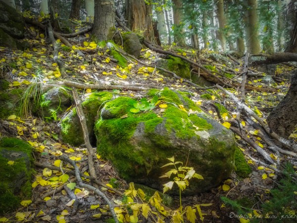 Mossy Rocks along the Inner Basin Trail. Captured with Galaxy Nexus Smartphone