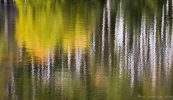 mjensen-lockett-meadow-tank-abstract-9264