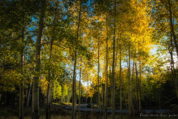 Late afternoon shot along Snowbowl Road. It's looking good! Fuji X-1
