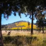 mjensen_hart-prairie-rd-aspens-0070