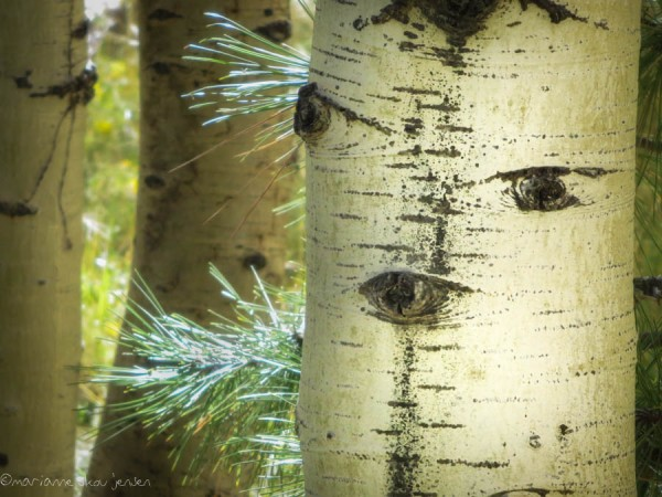 Must include an Aspen Face, of course! Taken at Lockett Meadow. (Canon N)