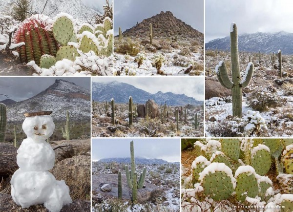 Collage of a rare snowstorm in the Preserve