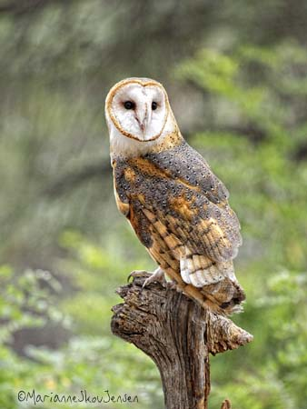 Did you know the Flagstaff Arboretum had a Raptor show?