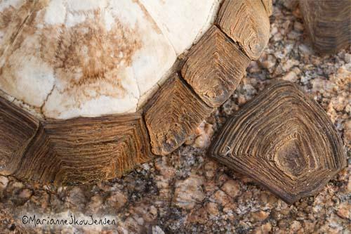 tortoise shell covering